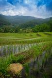 Терраса риса в Thialand Стоковое Изображение RF