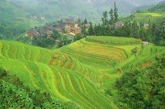 терраса риса гор фарфора зеленая Стоковые Изображения