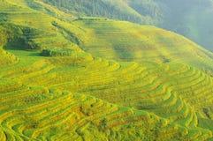 терраса риса гор фарфора зеленая Стоковая Фотография RF