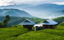 Терраса риса на Чиангмае Стоковые Изображения