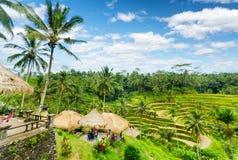 Терраса риса острова Бали, Индонезии стоковая фотография