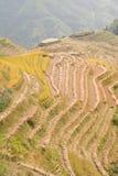 терраса риса поля Стоковое Изображение