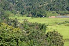терраса риса полей зеленая Стоковые Изображения