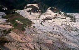 терраса риса Стоковая Фотография RF