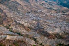 терраса риса Стоковое Изображение RF