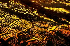 Терраса риса Bada на сумраке Стоковое Фото