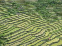 Терраса риса Batad в Banaue, Ifugao, Филиппинах стоковое фото