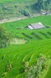 Терраса шага риса в Вьетнаме Стоковая Фотография RF