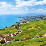 Терраса Швейцария виноградника Lavaux Стоковая Фотография