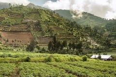 Терраса fields вокруг plateu Dieng, Ява, Индонезии Стоковое фото RF