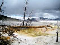Терраса Mammoth Hot Springs Стоковое фото RF