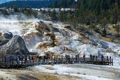 Терраса Minerva, Mammoth Hot Springs стоковые изображения