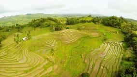 Террасное поле риса в острове Bohol philippines Красивый филиппинец природы Виды с воздуха сток-видео