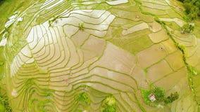 Террасное поле риса в острове Bohol philippines Красивый филиппинец природы Виды с воздуха акции видеоматериалы