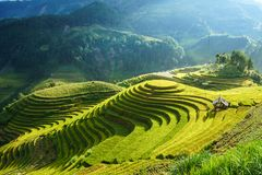 Террасное поле риса в сезоне сбора в Mu Cang Chai, Вьетнаме Назначение перемещения Mam Xoi популярное стоковое фото