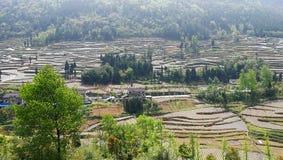 Террасное поле сельского хозяйства в южном Китае Стоковые Изображения