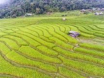 Террасное поле риса в холме Стоковая Фотография RF