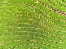 Террасное поле риса в холме Стоковые Фотографии RF