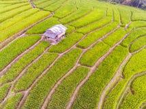 Террасное поле риса в холме Стоковые Изображения