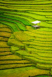 Террасное поле риса в Mu Cang Chai, Вьетнаме стоковые фото