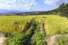 Террасное поле риса с оросительным каналом на кальяне Piang PA запрета, Чиангмае в Таиланде стоковое фото
