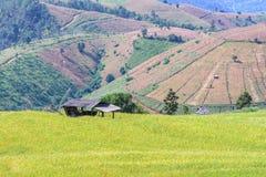 Террасное поле риса с предпосылкой горы на кальяне Piang PA запрета, Чиангмае в Таиланде, фокусе на коттедже стоковые фото