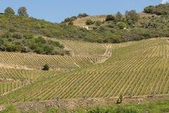 Террасные виноградники Дуэро River Valley Стоковая Фотография