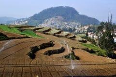 Террасные поля с спринклерами воды на ферме Стоковое фото RF