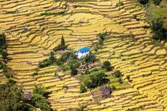 Террасные поля небольшого дома рисовых полей и примитива Стоковые Изображения RF