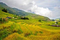 Террасные поля риса Стоковые Изображения RF