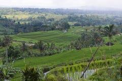 Террасные рисовые поля Стоковое фото RF