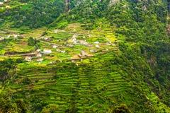 Террасные холмы, Мадейра стоковое изображение rf