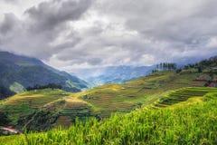 Террасный взгляд поля риса, tan PA Ла, Вьетнам Стоковое фото RF