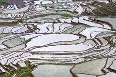 Террасный рис fields в Yuanyang, Юньнань, Китае Стоковые Фото