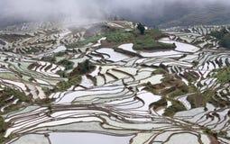 Террасный рис fields в Yuanyang, Юньнань, Китае Стоковое Фото