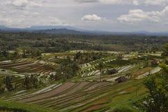 Террасы Бали Индонезия риса Стоковое Изображение RF