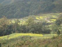 террасы весной в южном Китае стоковое фото