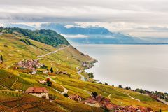 Террасы виноградника на женевском озере в осени Стоковые Фотографии RF