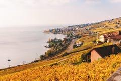 Террасы виноградника на женевском озере в осени Стоковое Изображение