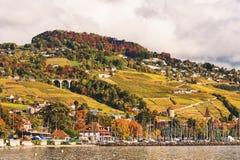 Террасы виноградника на женевском озере в осени Стоковое Фото