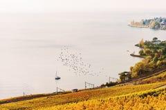 Террасы виноградника на женевском озере в осени Стоковая Фотография