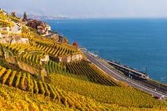 Террасы виноградника на женевском озере в осени Стоковое Изображение RF