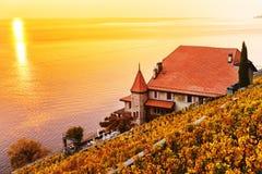 Террасы виноградника на женевском озере в осени Стоковые Изображения