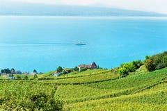Террасы виноградника Lavaux швейцарские Стоковая Фотография