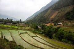 Террасы Вьетнам риса стоковое изображение