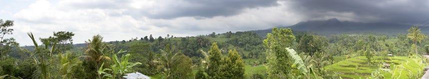 Террасы и пальмы риса bali Индонесия стоковые фотографии rf