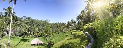 Террасы и пальмы риса bali Индонесия стоковая фотография