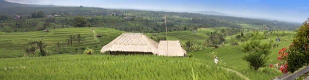 Террасы и пальмы риса bali Индонесия стоковое фото
