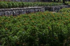 Террасы кровати сада ноготков от стороны Стоковое Фото