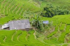 Террасы поля риса Стоковые Фотографии RF